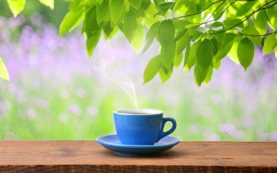 Dégustation de thé dans le patio de Légèreté d'Être